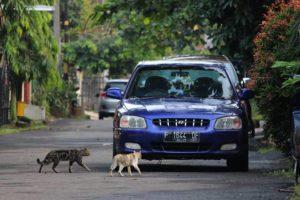 Pilih Mobil Baru Atau Mobil Bekas